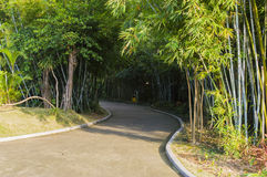 Garden path. Curved path in a peace garden royalty free stock photo