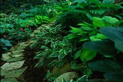 Garden Path. A path through a lush garden Stock Image
