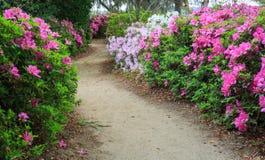 Garden Path through Azaleas Stock Photos