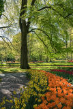 Garden path with a border of flowers. In the Keukenhof park, Netherlands Royalty Free Stock Photos