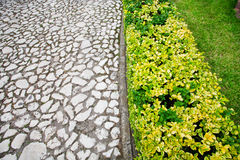 Garden path with cobblestone and plants Royalty Free Stock Images