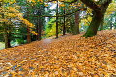 Garden Path Covered in Autumn Leaves Royalty Free Stock Photography