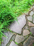 Garden path and green grass Royalty Free Stock Image