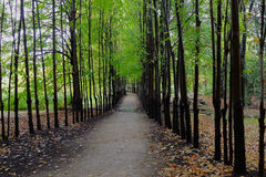 Garden Path Through Line of Trees Royalty Free Stock Photos
