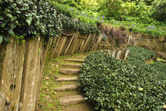 Garden path with old wooden fence in the green garden. View of Landscaping the path in the garden Royalty Free Stock Photography