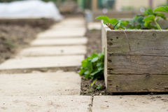 Garden path and planter Stock Photo