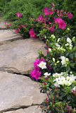 Garden path with rhododendron Royalty Free Stock Photos