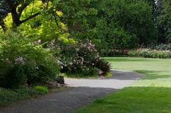 Garden Path in Spring. Sun kisses a path in lush green park with roses in the background Stock Photos
