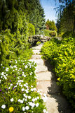 Garden path in summer Royalty Free Stock Image