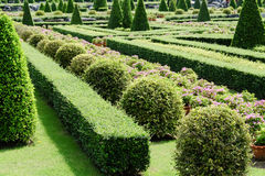 Garden path with topiary landscape Stock Images