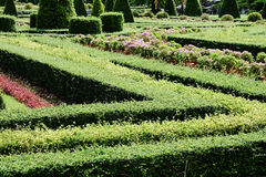 Garden path with topiary landscape Stock Photography