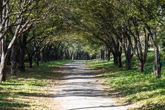 Garden path trees Royalty Free Stock Images