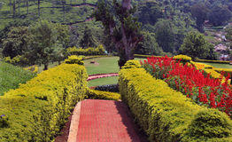 Garden path with trimmed plants. Flowers with trees and trimmed plants kateri park near ooty, tamilnadu, india Stock Image