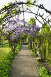 Wisteria Arches. Garden alley with statues and wisteria arches Royalty Free Stock Photo
