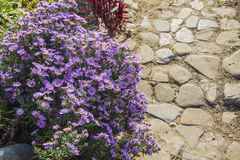 Garden path. Winding through multi-coloured flowers Royalty Free Stock Photos