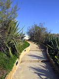 Garden Pathway. A beautiful stepped pathway in Malta, lined by wild growing plants Stock Image