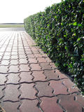 Garden pathway. Nice and tidy garden pathway paving by brick Stock Images