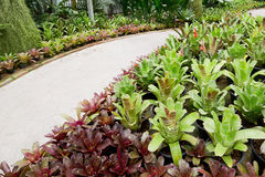 Garden pathway and bromeliad. Stock Photo