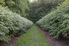 Garden Pathway. A garden pathway to a forest royalty free stock photography