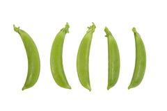garden pea Stock Image