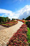Garden at the peak of Doi Inthanon Stock Image