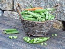 Garden peas Royalty Free Stock Image