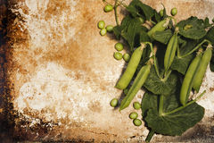 Garden Peas on Metal Stock Photography