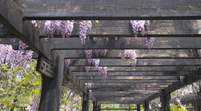 Garden pergola Stock Images