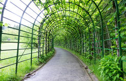 Garden pergola tunnel walkway in park. Stock Images