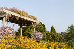 Garden Pergola. A wooden garden pergola, surrounded by pretty summer yellow flowers with a hanging flower pot Stock Images