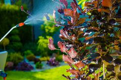 Garden Pest Control Spray Stock Image
