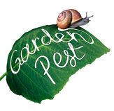 Garden Pest Stock Images