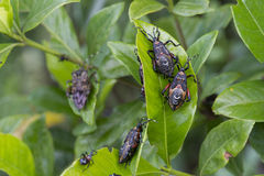 Garden pests Royalty Free Stock Images