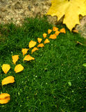 Garden petals with leaf. Way of flowers petals with maple leaf Stock Images