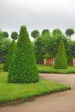 Garden of Peterhof in St.Petersburg, Russia. Cut Trees in Garden of Peterhof in St.Petersburg, Russia Stock Photos