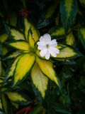 A garden phlox by the roadside in Montreal stock photos