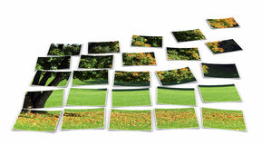 Garden photo puzzle Stock Images
