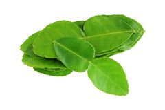 Garden picked Kaffir lime leaves Stock Images