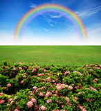 Garden pink flower lawn blue sky. Daylight green grass rainbow Stock Images