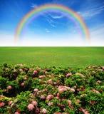 Garden pink flower lawn blue sky stock images
