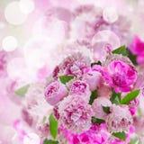 Garden of pink peonies Royalty Free Stock Photo