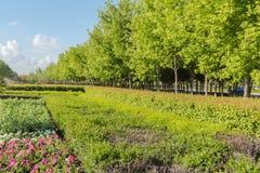 Garden plant landscape Stock Photography