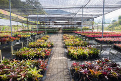 Garden of plant nursery in Northern of Thailand Stock Images