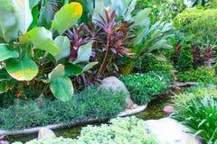 Garden with plant Royalty Free Stock Photos