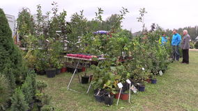 Garden plant, shrub fruit tree and flower trade outdoor. KAIRENAI, LITHUANIA - SEPTEMBER 19, 2014: garden plant, shrub and fruit tree and flower trade outdoor on stock video footage
