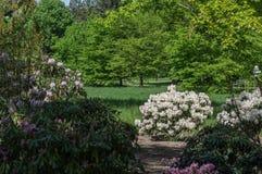 Garden, Plant, Vegetation, Flower royalty free stock images