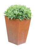 Garden Planter with succulent plant Stock Photography