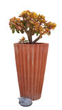 Garden Planter with Succulent Plant & Cat Ornament Royalty Free Stock Photography