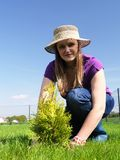 Garden planting Stock Photography