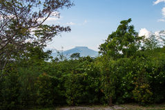Garden with plantings and Mountain background. In Thai Royalty Free Stock Photography